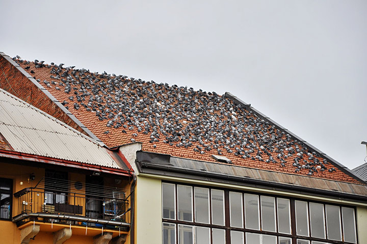 A2B Pest Control are able to install spikes to deter birds from roofs in West Thurrock.