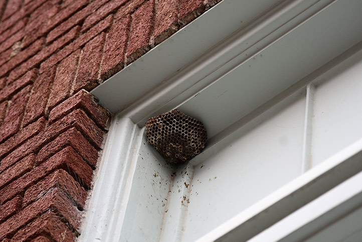 We provide a wasp nest removal service for domestic and commercial properties in West Thurrock.